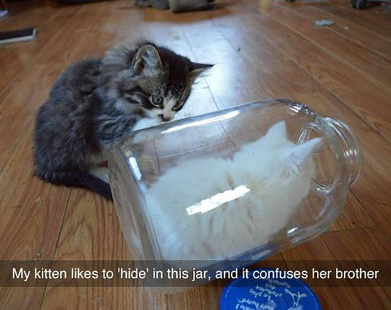 funny-pictures-1318