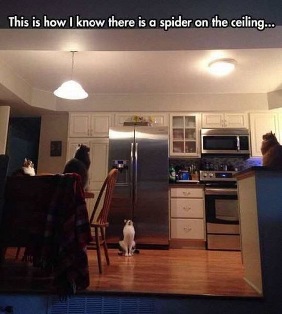 funny-pictures-1329