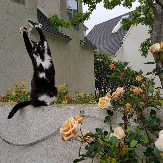 funny_cat