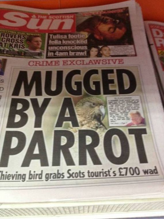 Hilarious News Headlines That Will Keep You Laughing All ...