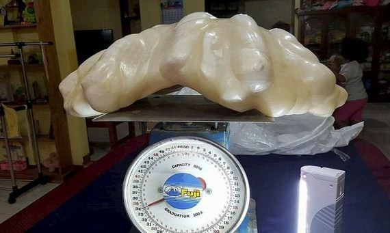 giant_34kg_pearl