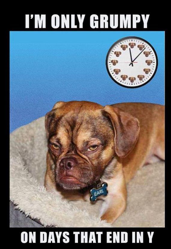 grumpiest_dog