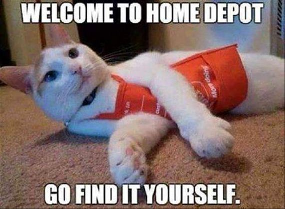 olympic-cat-8-17