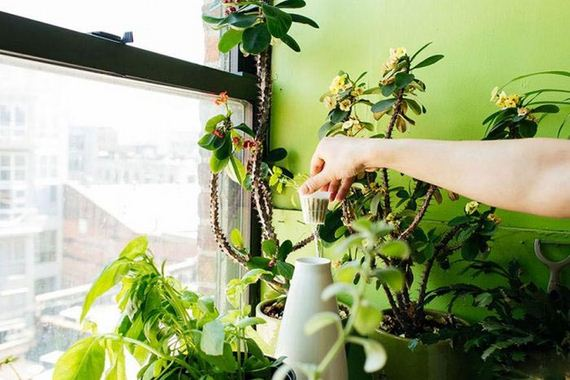 plants_in_an_apartment