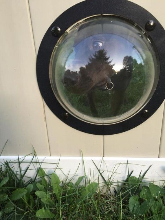 porthole_for_dogs