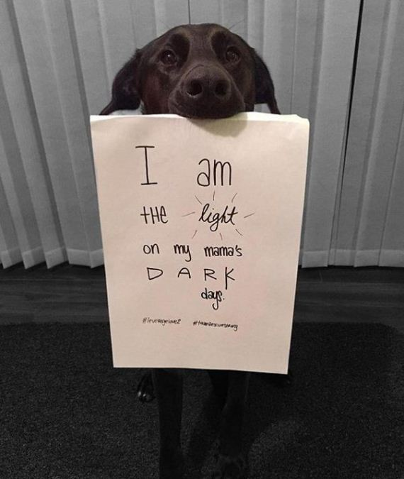 rescue-dogs-wear-signs-that-prove-they-werent-the-only-ones-saved