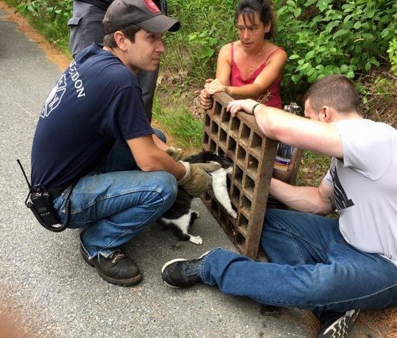 rescued_cat_01