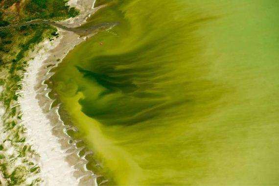 toxic_utah_lake