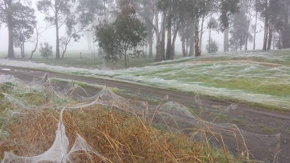 turns-out-spider-frost-is-every