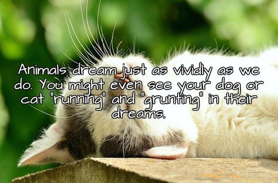 we-can-only-try-to-understand-dreams