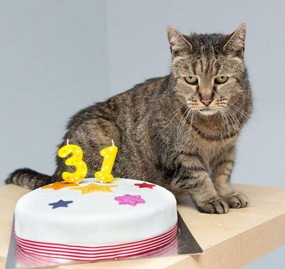 worlds_oldest_cat