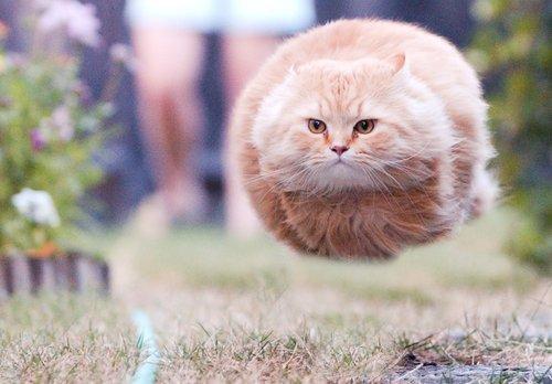 cat missile