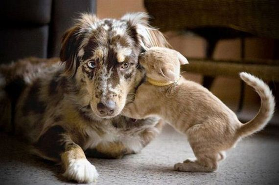Cute dog and cat friends - photo#30