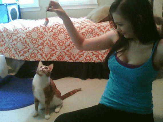 Gif котенки и девушки