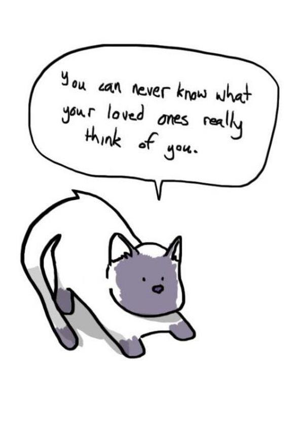 04-soft-cats