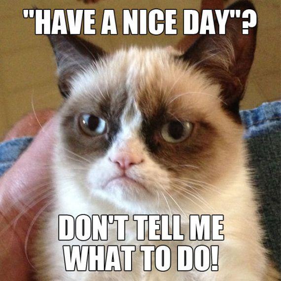 14-grumpy-cat