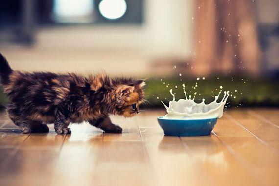 04-very-cute-kitten