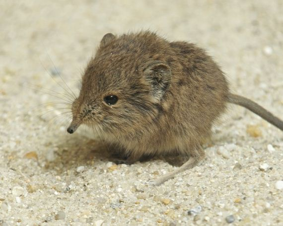 07-look-at-this-baby-elephant-shrew
