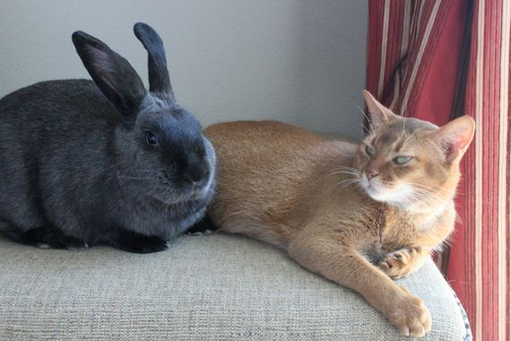12-rescued-cat-and-rescued-rabbit-are-best-friend