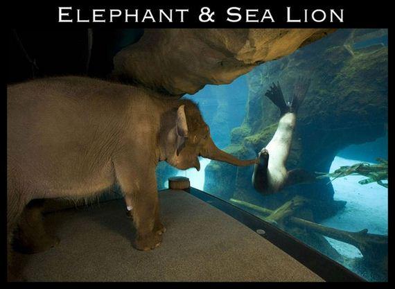 01-cute-interspecies-friendships