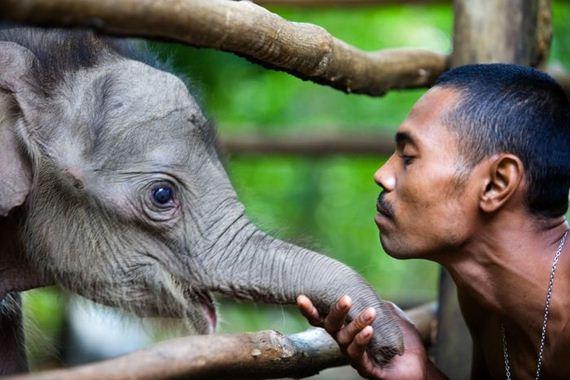 03-the-best-animal-photos
