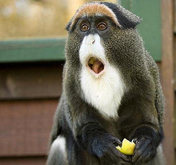 08-extremely-shocked-animals