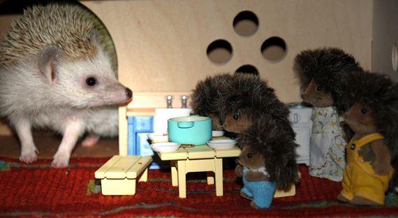 03-Hedgehogs-Things