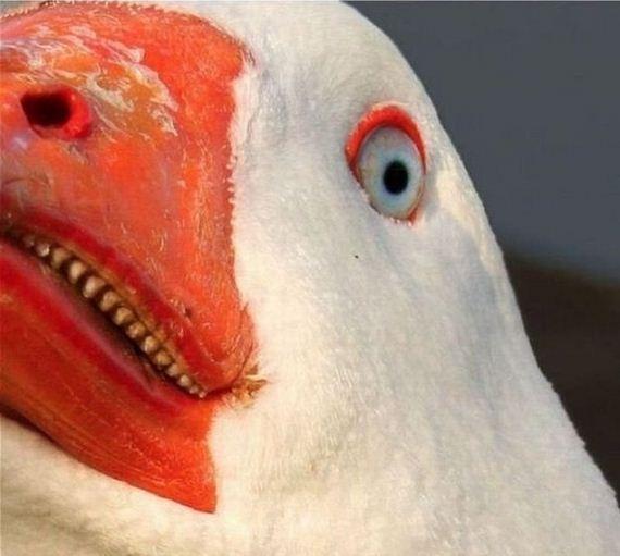 03-Duck-Duck-Goose