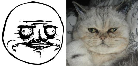 05-Cats-As-Rage-Faces