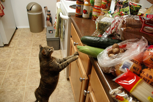 02-cats- paleo-diet