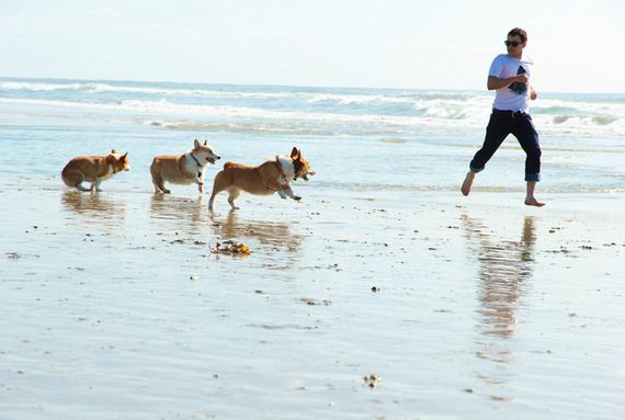 03-Happens-When-140-Corgis-Have-Beach-Party