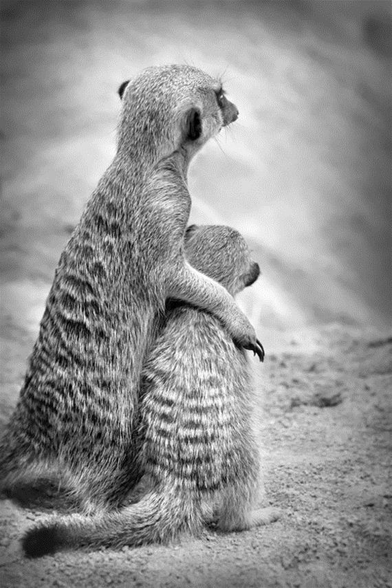 04-Animals-Demonstrating-Why-Mothers-Love