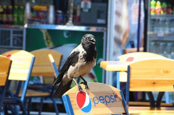 02-where_ukrainian_crows_get_their_food