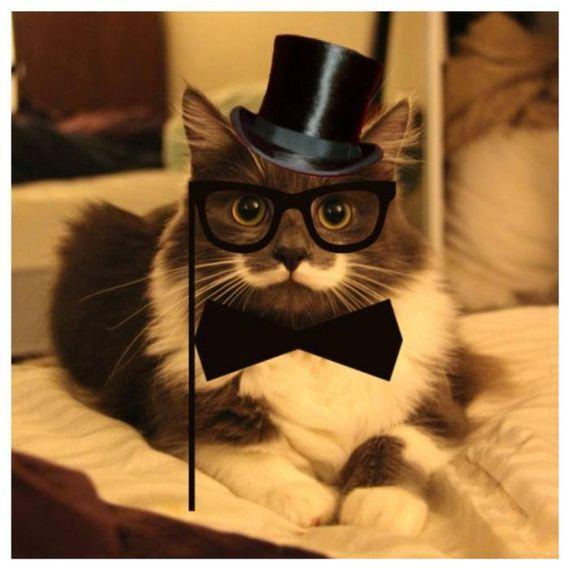 16-mustache_cat