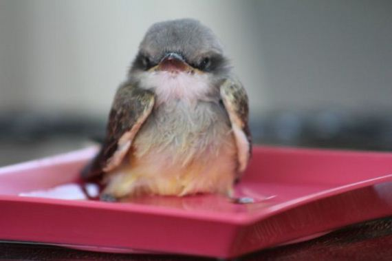 06-baby_bird_is_rescued_by_the_kindness_of_man