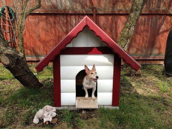 11-dog_house