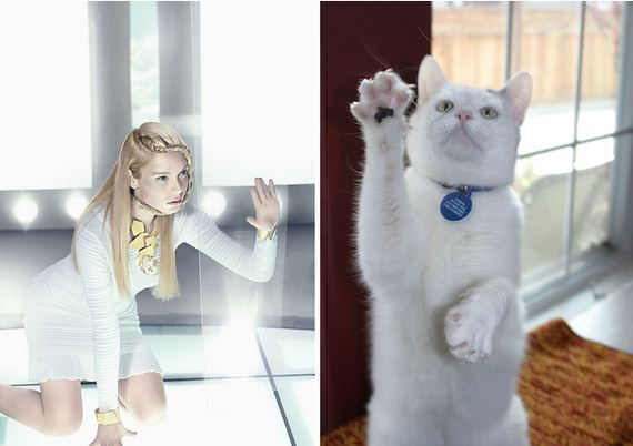 18-Awkward-Modeling-Poses-Acted-Cats