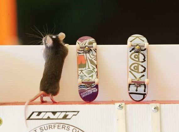 06-you_have_to_see_these_pictures_of_skateboarding_mice