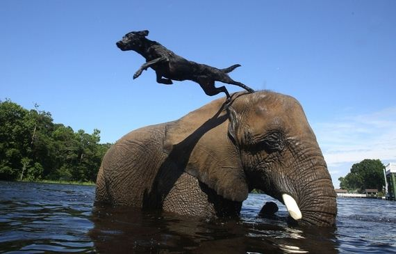 05-Friendship-Dog-And-Elephant