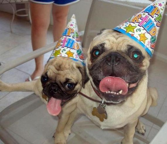 05-animals_that_are_having_the_best_birthday_ever
