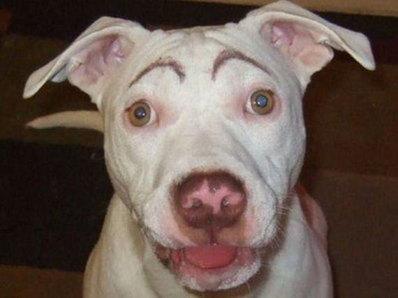 06-eyebrows_on_dogs
