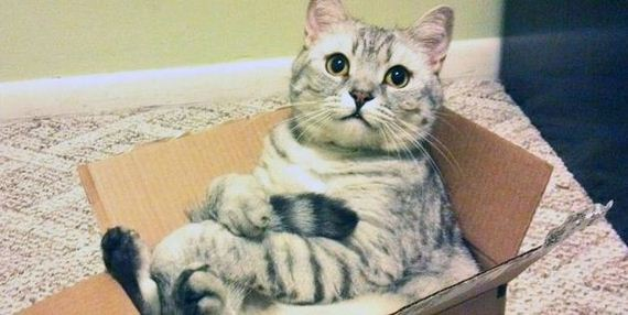 09-cats_in_boxes
