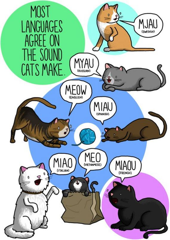 06-what_noises_do_animals_make_in_other_languages
