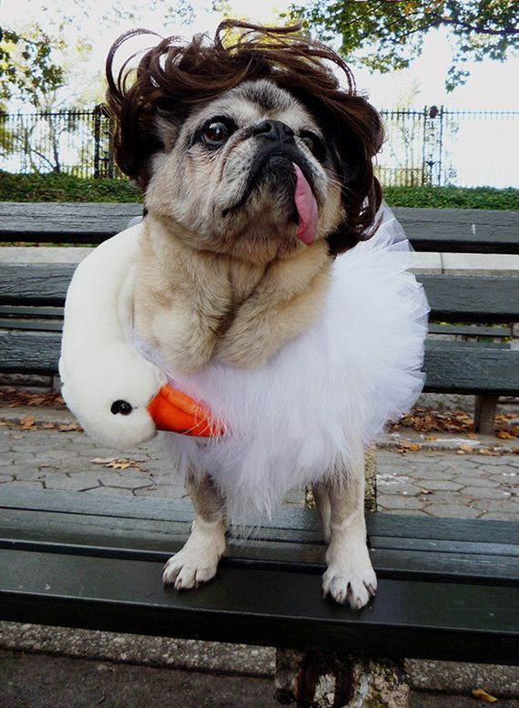 09-costumes-that-prove-pugs