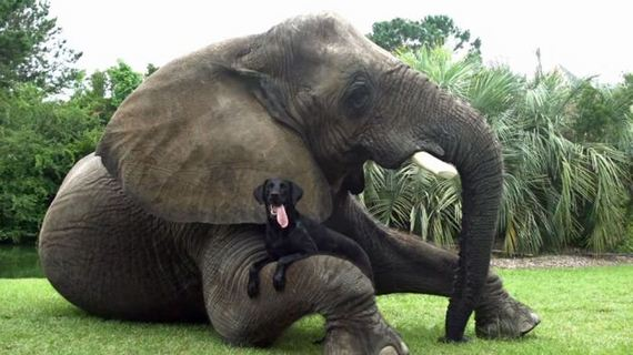 06-elephant_and_dog_01