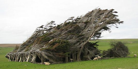 07-the_twisted_trees_of_slope_point