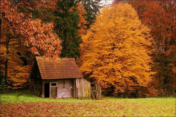 07-this_is_what_a_house_in_the_woods_should_look_like