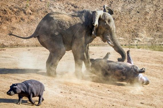 08-elephant_behemoth