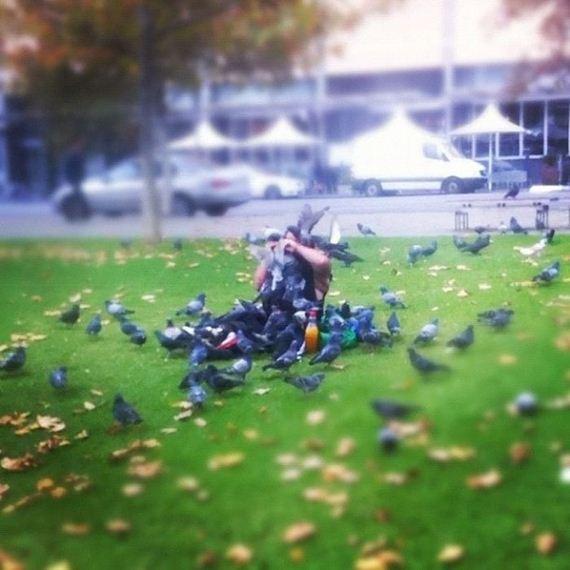 09-pigeons_01