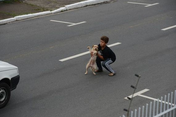 04-boy_gets_into_traffic_to_help_dog_that_was_hit
